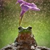 なんともファンタジー!自然の傘を差して雨宿りする動物達!
