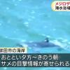 海←サメ出るから行かない、山←噴火するから行かない