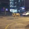 [悲報]ツイッター民が熊本地震で「ライオンが逃げた」と書き込んだ結果・・・(※画像あり)