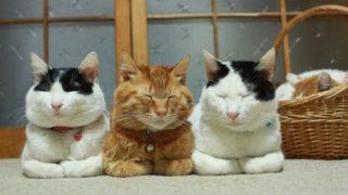 猫のお手手ないない座りwwwwwww