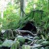 [衝撃]屋久島でニホンザルの「極めて珍しい」事例 が世界中で話題にwww!! 世界初の出来事www